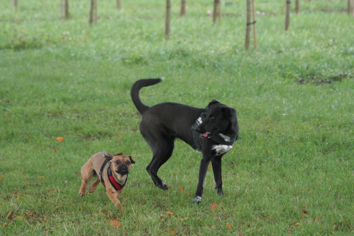 Hundeschule München - Hunderudel